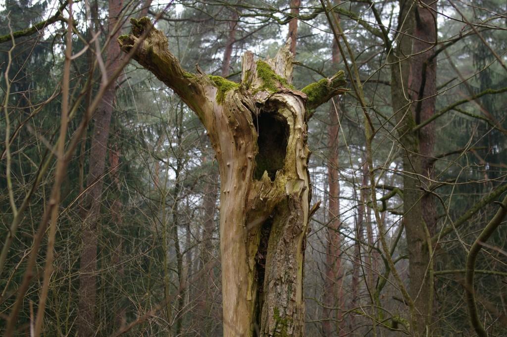 Medžio likučiai